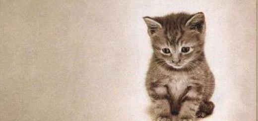 Incorporación segundo gatito en vivienda
