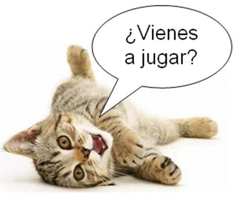 Movimiento de gatos - Imagui