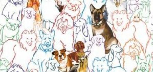 Feria 100 x 100 mascotas