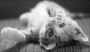 Zonas gato