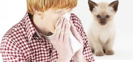 Combatir alergias de gato