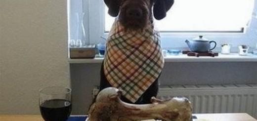 alimentacion_perro