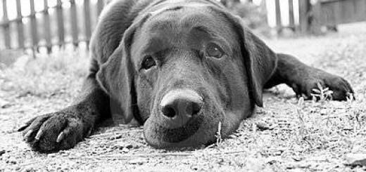 Por qué los perros comen excrementos