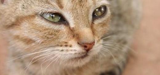 Marcaje orina en gatos