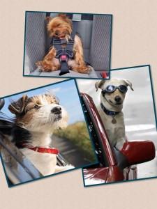 Como evitar los 39 mareos caninos 39 en un viaje en coche for Como evitar los gatos en el jardin