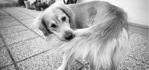 Comportamiento de los perros con la cola