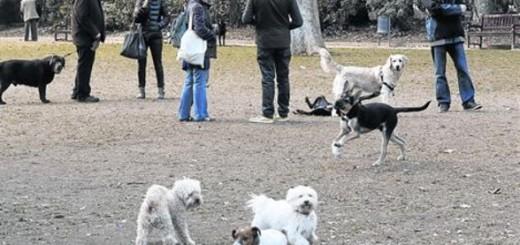 Barcelona multará con 1.500€ a los propietarios que no lleven atados a sus perros