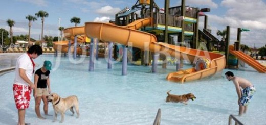 Parque acuático canino