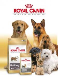 Pienso Royal Caanin - mejor pienso para perros