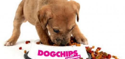 alimentacion cachorro
