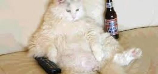 el gato obeso
