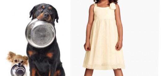 La importancia de alimentar a tu mascota canina